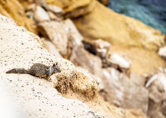 Cute little squirrel on the rock in nature