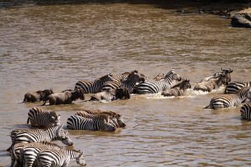 masai mara crossing during the migration season