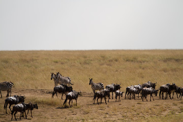 masai mara wildlife overwiew