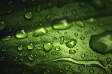 Macro closeup shot of green leafs with real rain drops on. Very useful for nature, healthy food, green design background.