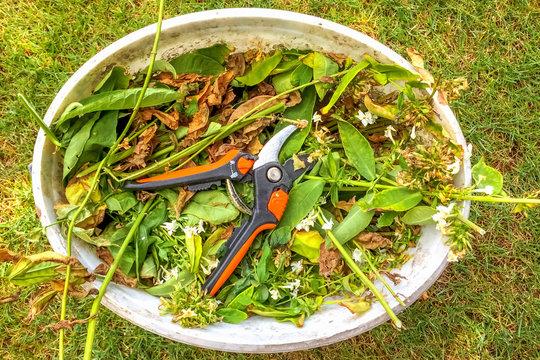 Eimer mit Gartenschere und Schnittgut, Garten