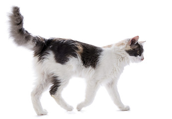Cat from Side