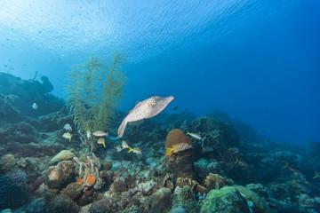 Riff + Koralle + Schwamm + Fisch - Karibik