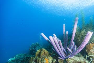 Riff + Schwamm + Korallen - Karibik