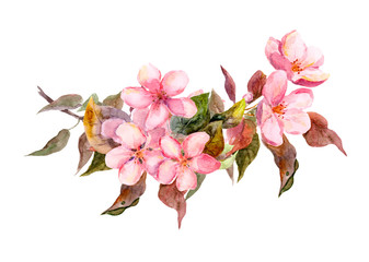 Blossom branch with pink flowers. Watercolor