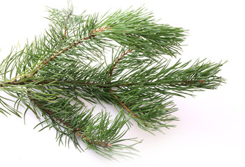 branches of fir tree isolated on white background christmas new year winter