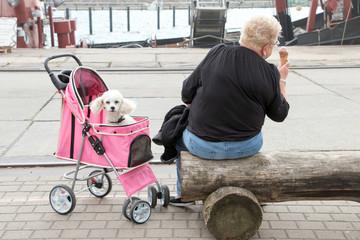 Weißer Pudel im rosa Hunde Buggy