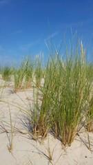 Fototapeta hohes Gras am Strand