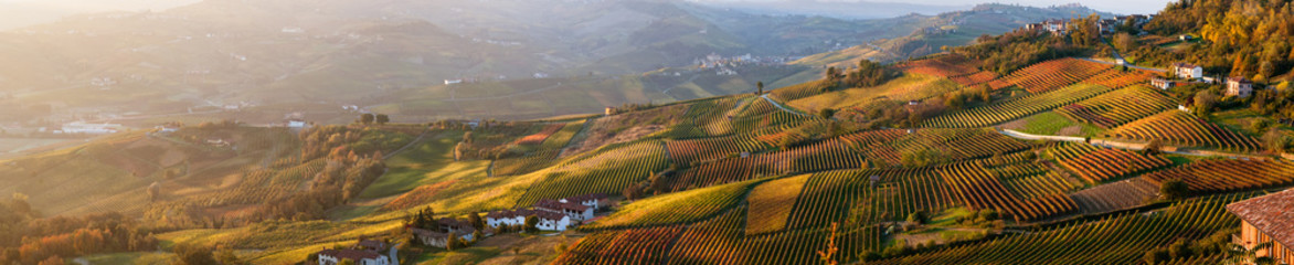 Panoramic view of vineyards of Piedmont in autumn