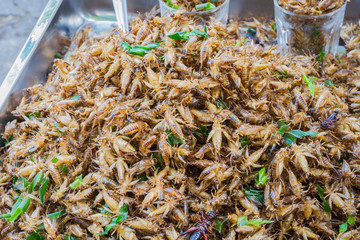 Ready to eat fried crickets sold in thai market
