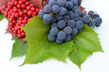 Guelder-rose berries with grapes on a white background