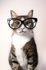 Domestic cat with eyeglasses.