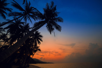 Palm Trees silhouettes on the Colorful Sky Sunset or Sunrise background