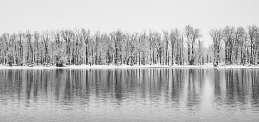 A panorama landscape of cold stark trees in a snow storm reflecting in the Bow River.