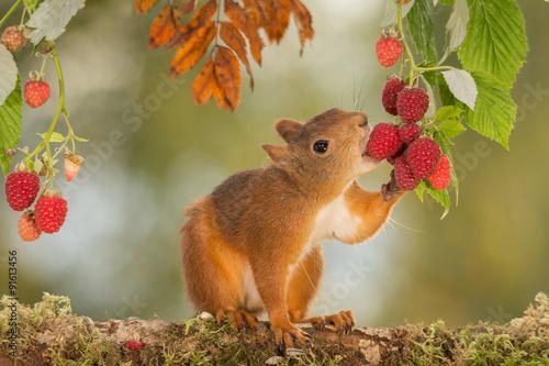 природа животные кролик листья осень деревья  № 2035348 без смс