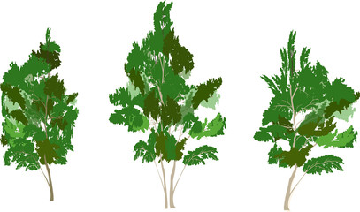 three green isolated trees illustration