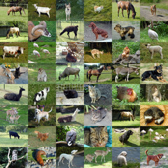 Set of 48 animals photos