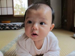 和室ではいはいする赤ちゃん