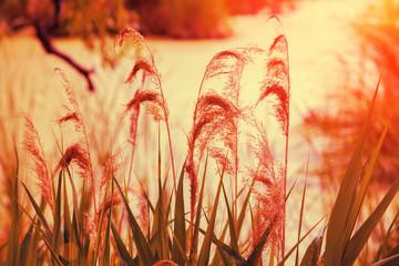 Autumn evening rural landscape