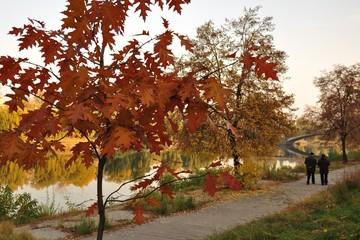 пейзажи, дерево, осень, река, желтый, оранжевый, цвет, на открытом воздухе