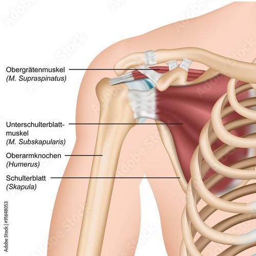 Anatomie Rotatorenmanschette, Schulter Vorderansicht\
