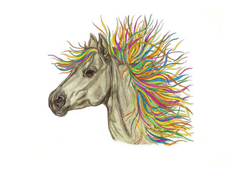 Beautiful horse illustration with bright colorful creative mane. Hand Drawn by pencil . Close-up