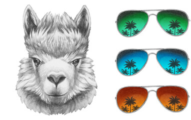 Portrait of Lama with mirror sunglasses and scarf. Hand drawn illustration.