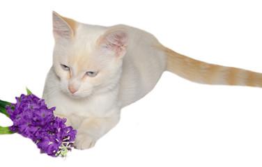 Ritratto in studio di un gattino con un bouquet di fiori