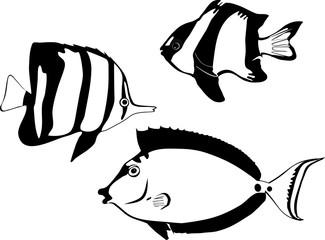Black and white marine fishes