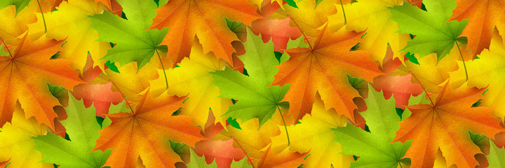 Horizontal banner, colored autumn maple leaves