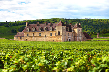Typical French vineyard and chateau
