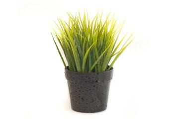 Wet herb in black pot.