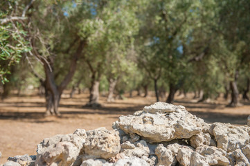 Stone wall border of olive trees field close up