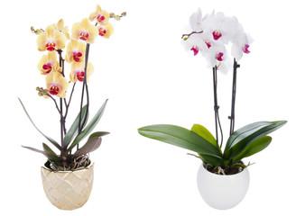 Fototapeta Orchid on a white background obraz
