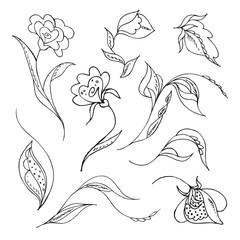 Fiori sketch n.1