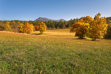 Autumn scenery with idyllic pasture and colorful trees