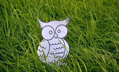 Coloring book owl bird  in a green grass