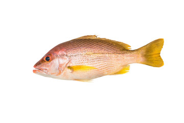 Red snapper isolated on white