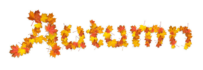 Word autumn made of bright maple leaves