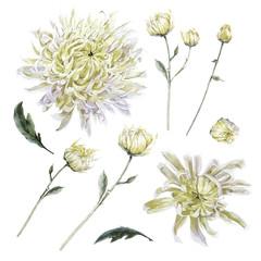 Set of vintage watercolor chrysanthemums leaves branches flowers
