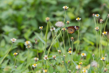 Butterfly on little flower with green background