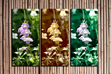 flowers photo collage frame on bamboo background