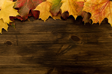 Colorful maple leaves on wooden background. Thanksgiving, autumn.