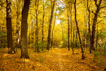 Gold Autumn landscape with footpath - Beautiful Trees in the