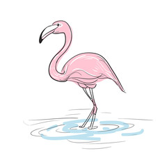 Hand drawn sketch of flamingo