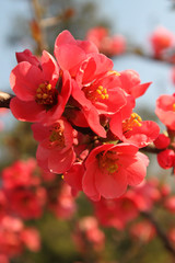 branch of red flowers on a background of blue sky