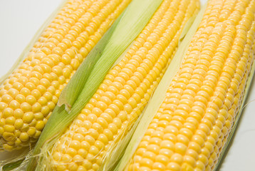 Ripe fruits of corn on over white