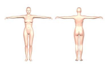 3D female body on white background