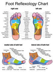 Reflex zones of the feet - soles and side views - accurate description of the corresponding internal organs and body parts. Isolated vector illustration on white background.