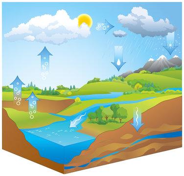 Water Cycle. Vector diagram